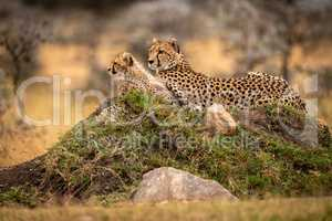 Cheetah lies with cub on grassy mound