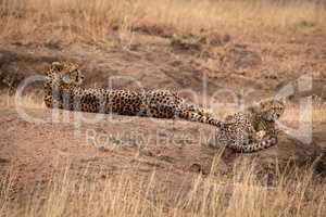 Cheetah lying beside cub on dirt mound