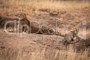 Cheetah lying beside cub on earth mound