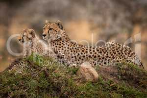 Cheetah lying with cub on grassy mound