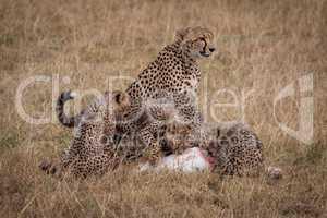 Cheetah sits as cubs eat Thomson gazelle