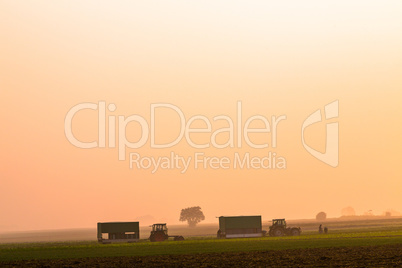 agriculture on a foggy autumn morning