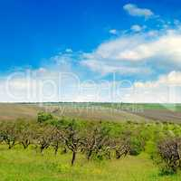 Orchard, agricultural land and cloudy sky.