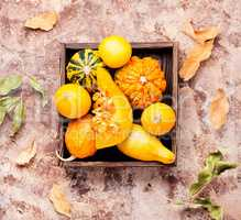 Autumn pumpkin in box