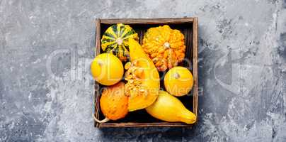 Autumn pumpkin in box