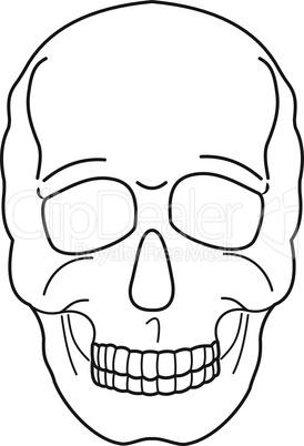 Human skull contour