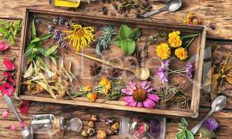 Healing herbs in wooden box