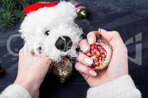 holiday symbolic Christmas dog
