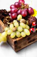 Autumn still life with grapes.