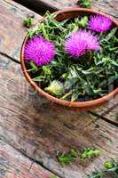 Onopordum and herbalism.Thistle