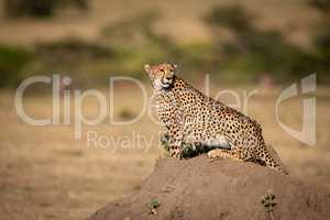 Cheetah sits on termite mound looking right
