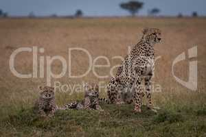 Cheetah sits with two cubs on grassland