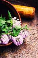 Healing plant clover