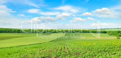 Hilly green field and blue sky. Wide photo.
