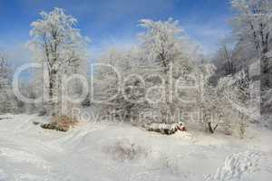 Winter idyll, white forest and blue sky