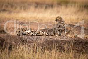 Cub sits beside mother lying on mound