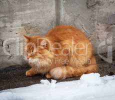 big red fluffy cat sits and freezes in the middle of the snow