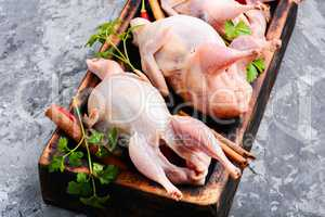 Raw quail with herbs
