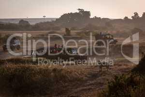 Leopard watches four safari trucks on savannah