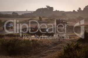 Leopard watching four safari trucks on savannah