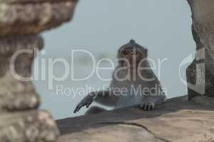 Long-tailed macaque sitting between stone bridge pillars