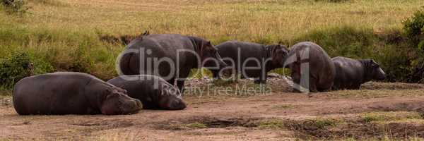 Six hippos lying and standing in savannah