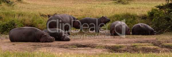 Six hippos lying and standing on savannah