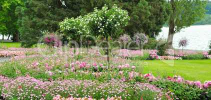 Summer park with lawn and flower garden. Wide photo.