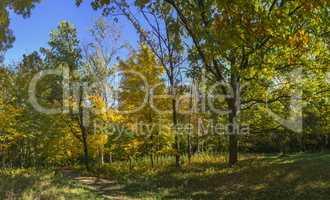 Trees in Sofiyivka Park in Uman, Ukraine