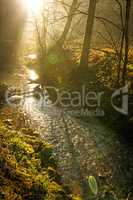 sun rays in a forest on a creek