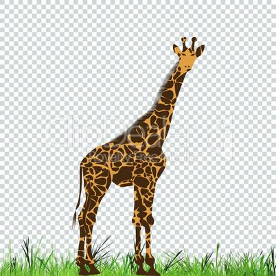 Giraffe vector animal illustration for t-shirt. Sketch tattoo design.
