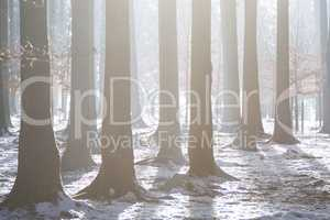 Wintry forest landscape