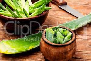Cut aloe leaf