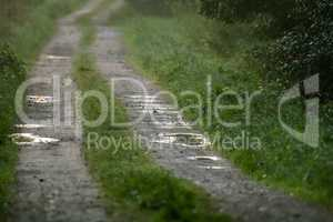 Puddles on the country woods road in foggy morning.