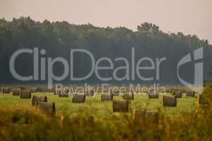 Hay bales on the field after harvest in foggy morning.