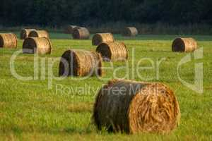 Hay bales on the field after harvest in morning.