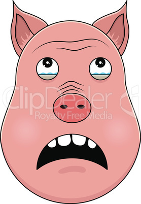 Head of pig in cartoon style. Kawaii animal.