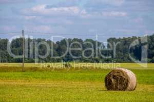 Hay bale in the meadow.