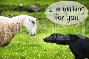 Dog Meets Sheep, Text I Am Waiting For You