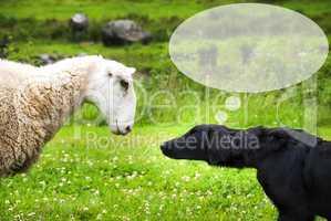 Dog Meets Sheep, Copy Space, Speech Balloon