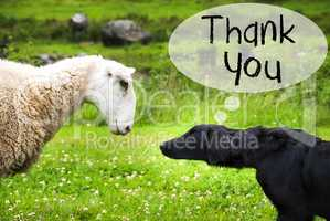 Dog Meets Sheep, English Text Thank You