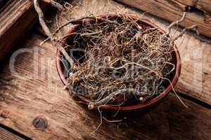 Maral root in herbal medicine