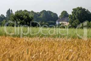 Two color cereal field with country house.