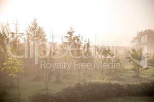 Mist in fruit garden in summer time.
