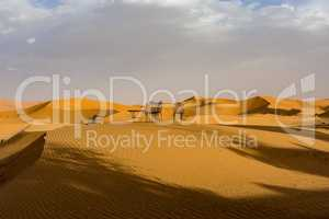 In the dunes of Erg Chebbi near Merzouga in southeastern Morocco.