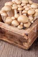Fresh raw mushrooms