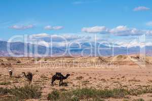 Morocco, High Atlas Landscape. Valley on the road to Ouarzazate