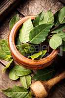 Bay leaf on a wooden surface