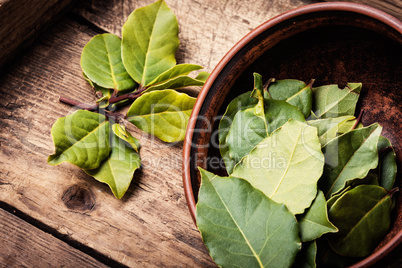 Herbs and spices,bay leaf