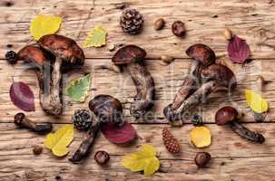 Forest raw mushrooms